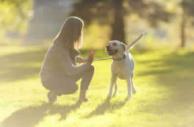 Dog Walker Prices Peterborough