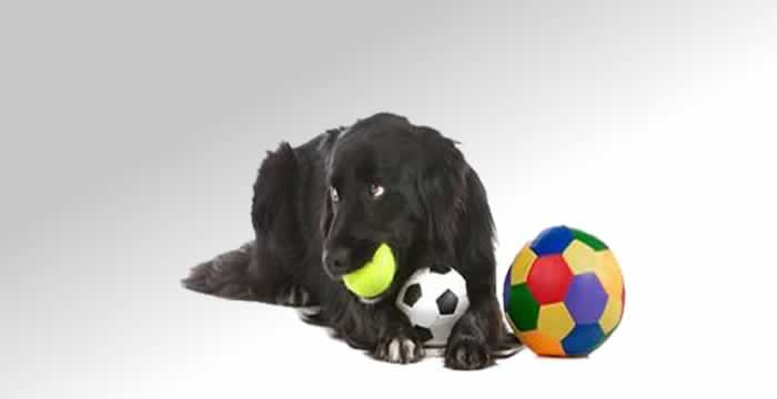 doggy day care Peterborough