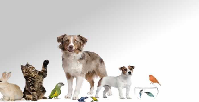 pet sitters Peterborough