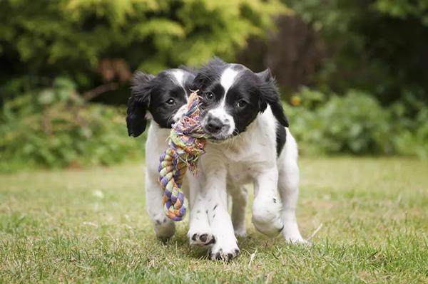 puppies playting